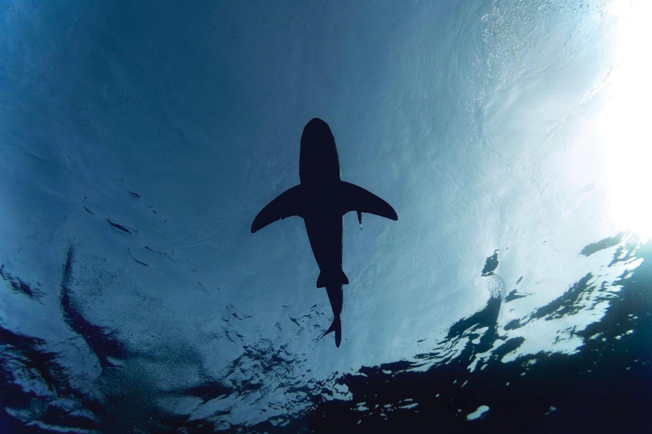 Avoid a Shark Attack